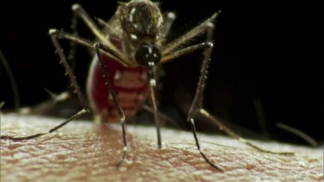 Photo of Vírus da zika pode se espalhar pela Europa nos próximos meses, diz OMS