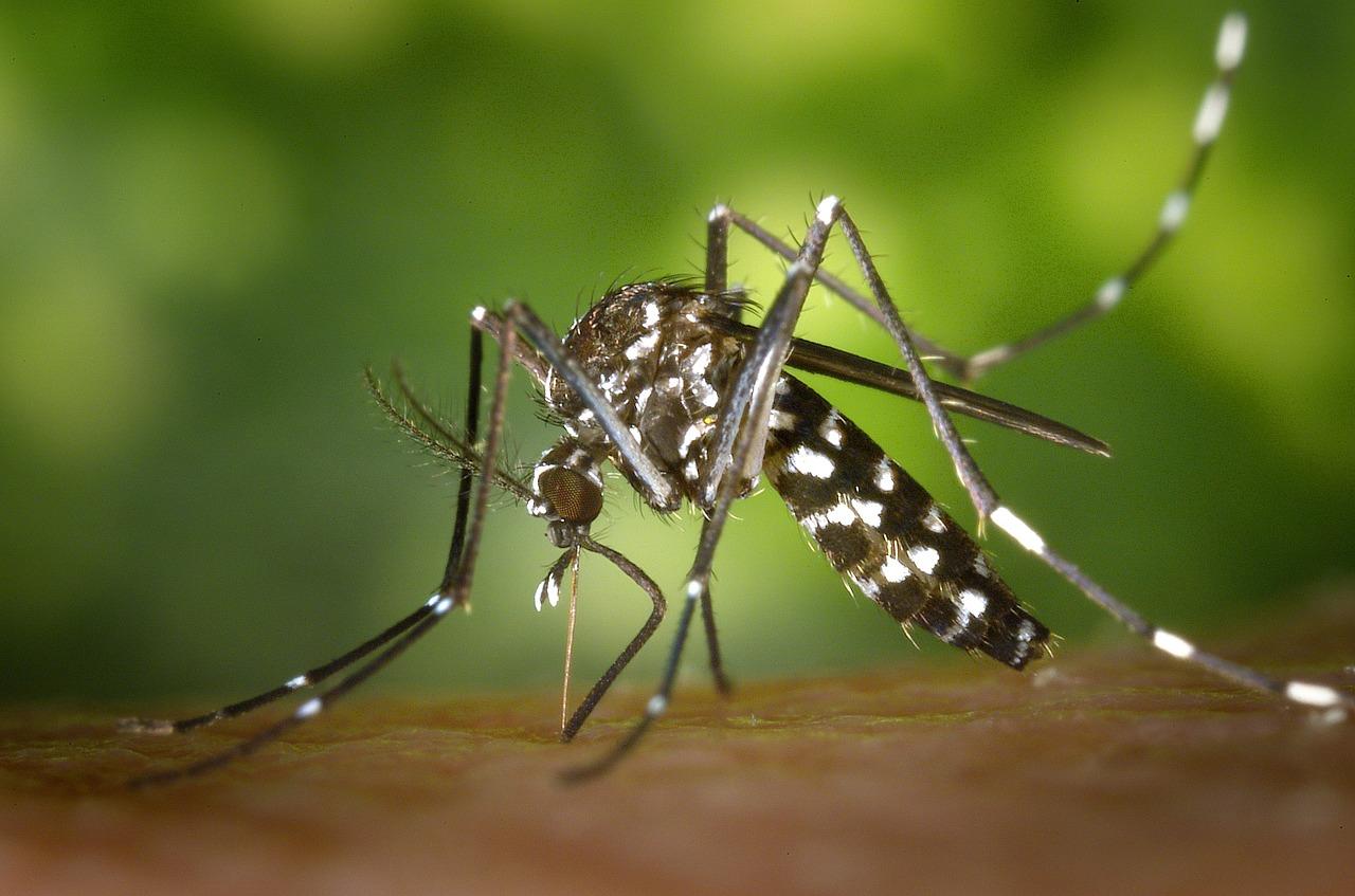 Photo of Brasil e Colômbia unem esforços para combater o Aedes aegypti