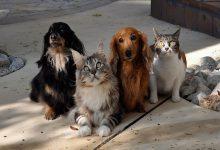 Foto de Senado aprova projeto que aumenta pena para maus-tratos contra cães e gatos