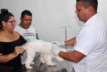 Foto de Campanha de vacinação contra a raiva começa na próxima semana em Tabatinga